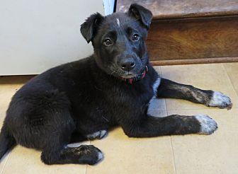 Adopt A Pet :: Andrina  - Saint Paul, MN