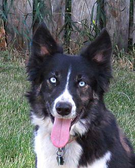 Adopt A Pet :: LULU  - Nampa, ID
