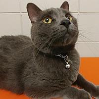 Adopt A Pet :: Smokey - South Saint Paul, MN