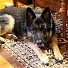 Adopt A Pet :: Nikia