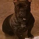 Adopt A Pet :: Naomi