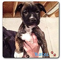 Adopt A Pet :: Bates - Maryville, IL