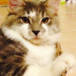 Good Kitties in Chandler, Arizona