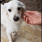 Adopt A Pet :: Nacho