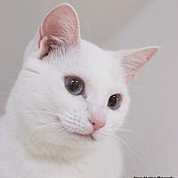 Adopt A Pet :: Clara - Chattanooga, TN
