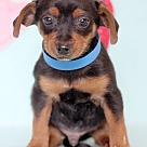 Adopt A Pet :: Bond