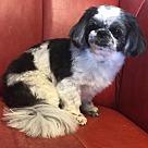 Adopt A Pet :: Miss Daisy (TIA)