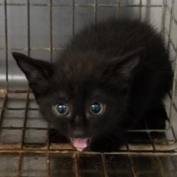 Pickens County SC Animal Shelter in Pickens, South Carolina