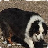 Adopt A Pet :: Max - Minneapolis, MN