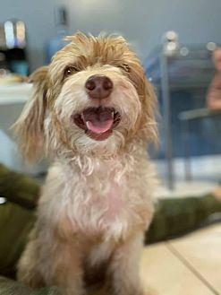 Adopt A Pet :: Lucky (AKA Mr. Wiggles)  - Bakersfield, CA