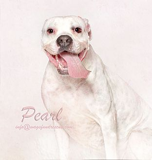 Adopt A Pet :: Pearl  - Houston, TX