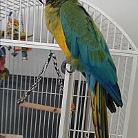 Adopt A Pet :: Skipper - Villa Park, IL