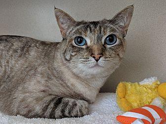 Adopt A Pet :: Sophie  - Laramie, WY