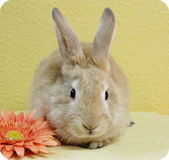 American Mix for adoption in Benbrook, Texas - Sophie