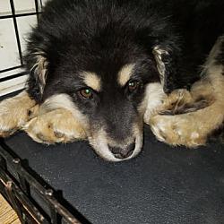 Lucky Paws Dog Rescue Inc  in Regina, Saskatchewan