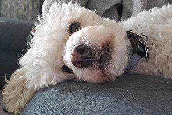 Toby Photo #1