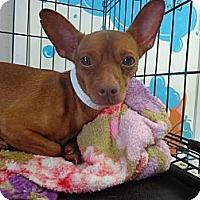 Adopt A Pet :: Gator - Brooksville, FL