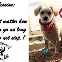 Adopt A Pet :: Mia - Pierrefonds, QC