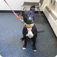 Adopt A Pet :: Sasha - Toledo, OH