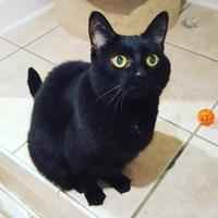 Adopt A Pet :: Thelma - Hastings, MN
