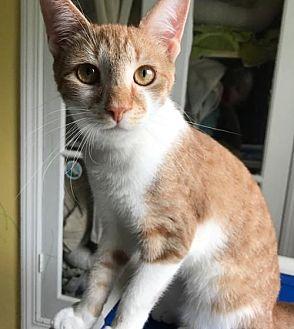 Adopt A Pet :: Kits  - Devon, PA