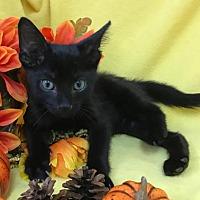 Adopt A Pet :: Honeydew - Oviedo, FL