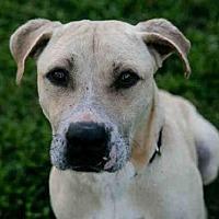 Adopt A Pet :: *COLTON - Austin, TX