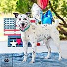 Adopt A Pet :: Imposter