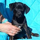 Adopt A Pet :: Colt