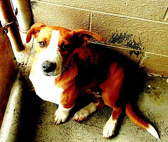 Sweetwater Tn Dog Rescue