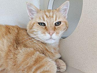 Adopt A Pet :: Cliff  - Laramie, WY