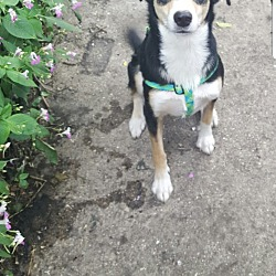 Puppies for Sale in Milwaukee Wisconsin - Adoptapet com