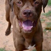 Adopt A Pet :: Mellow - Fairfax Station, VA