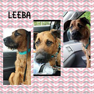 Adopt A Pet :: Leeba  - Anchorage, AK