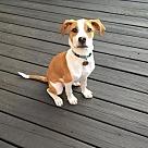 Adopt A Pet :: Cash/Crash