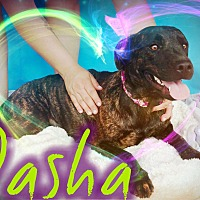 Adopt A Pet :: Dasha - Odessa, TX