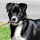 Adopt A Pet :: Quarter B