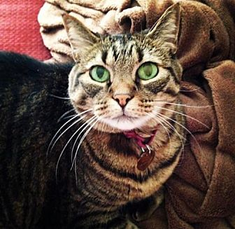 Adopt A Pet :: Maddy  - Phoenix, AZ