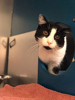 Adopt A Pet :: Chance  - Moose Jaw, SK