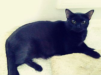 Adopt A Pet :: Love from LOUISE..  - Ft Myers Beach, FL