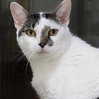 Adopt A Pet :: Nadia - Wayne, NJ