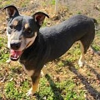Adopt A Pet :: Happy - Memphis, TN