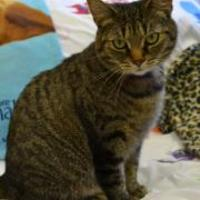 Adopt A Pet :: Jaclyn - Erie, PA