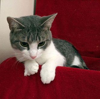 Adopt A Pet :: Annabelle  - Concord, NC