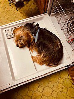 Adopt A Pet :: MOLLY  - Oakland, CA