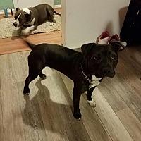 Adopt A Pet :: Benny - Los Angeles, CA