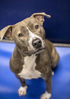 Adopt A Pet :: Star  - Henderson, NC