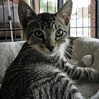 Adopt A Pet :: Joey - Oakhurst, NJ