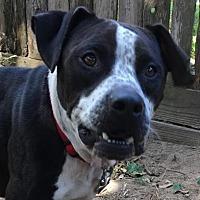 Adopt A Pet :: Zeke - Kingwood, TX