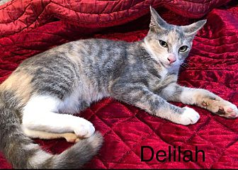 Adopt A Pet :: Delilah  - Northwood, NH